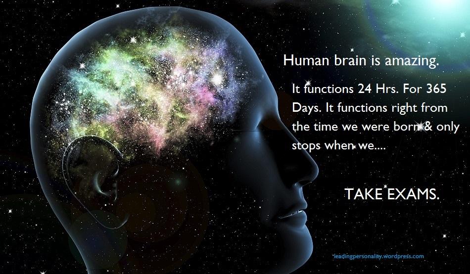Human Brain Wallpaper human brain wallpaper